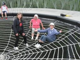 spider web2