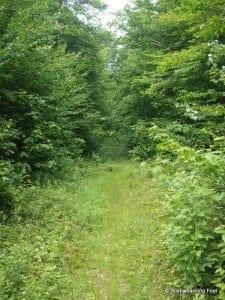 Old logging road off Raven Lake Road