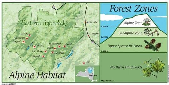 Adirondack Alpine habitat