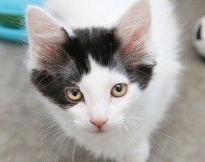 IMG_2631 kitten(1)