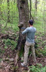 Daniel Bishop coring a maple