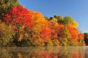 Colorful autumn foliage