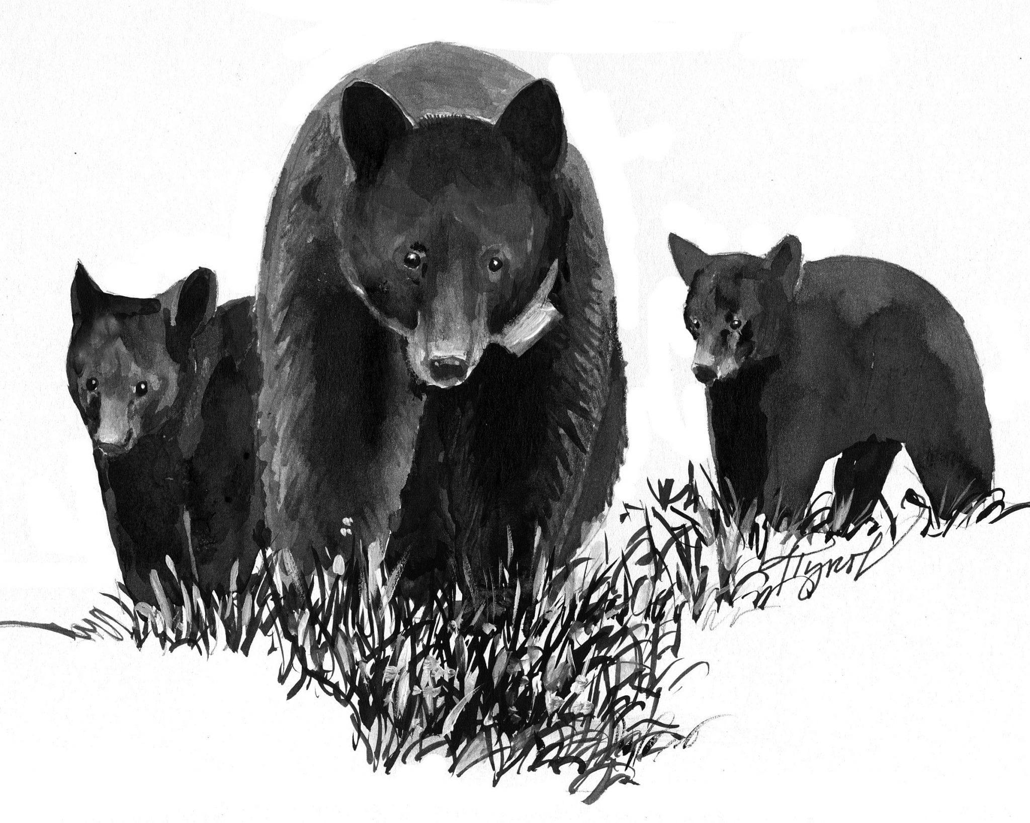 Black bear cub with creamy white coat baffles scientists - AOL News