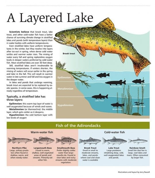 lake trout cold water fish layered lake illustration by Jerry Russell