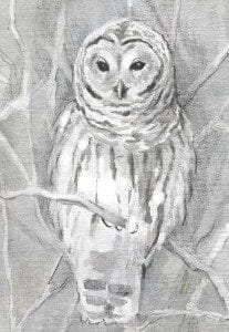 TOS_Barred_Owl_winter