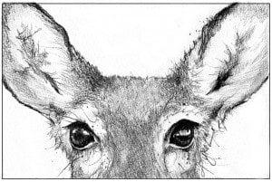 TOS_Deer_Vision