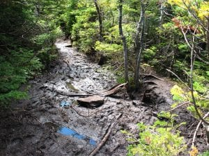 Mud Season Muddy Trail Adirondacks (Adirondack Mountain CLub Photo)