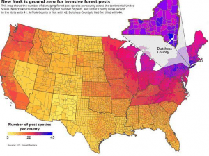 As indicated on this national map, New York is ground zero for the introduction and spread of invasive forest pests