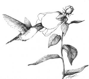 the outsider hummingbird