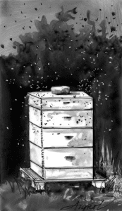 honeybees the outside story