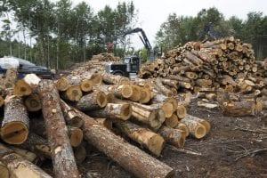 Logs at a lumber landing