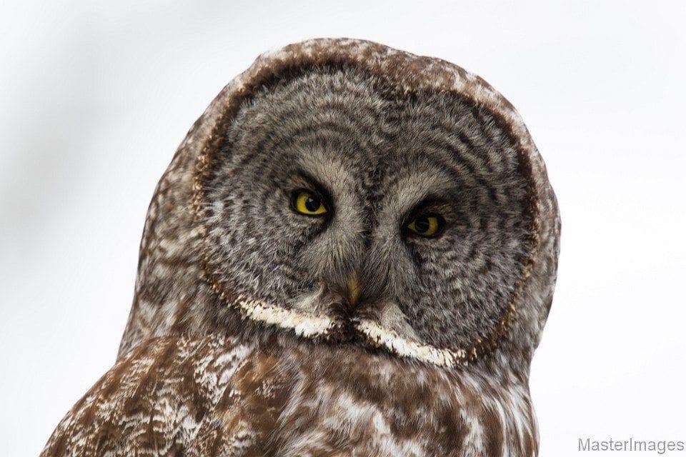 Environmental factors influence both abundance and genetic diversity in a widespread bird species