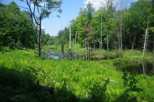 DeNeale Property wetlands & woods