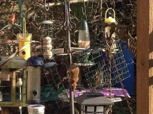 obsessive bird feeding photo courtesy Monitor Pest Control