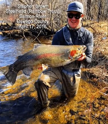 2016 record steelhead caught by stephen brown