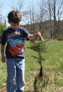4H volunteer planting a tree in Warrensburg