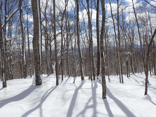 Baker Mountain woods after snowstorm Photo by Phil Brown