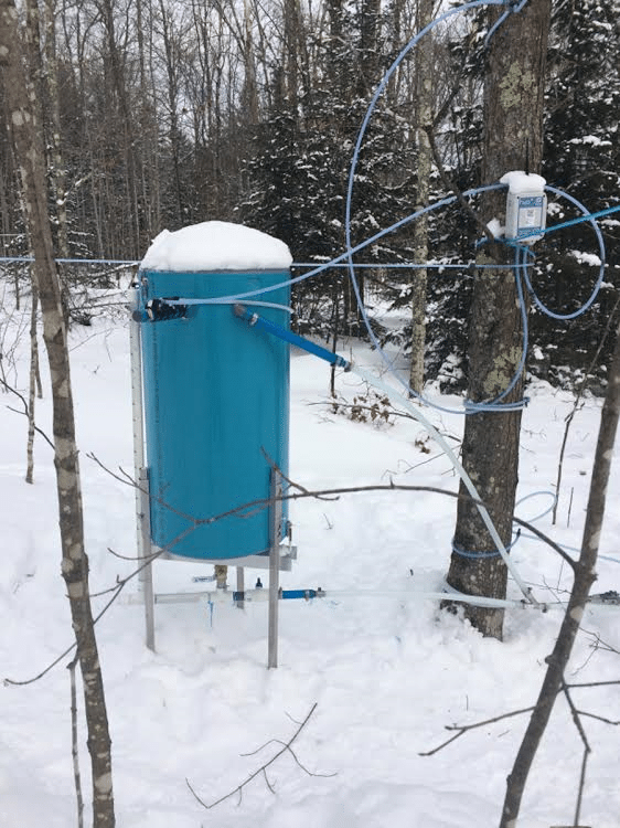 Maple sap tubing trial at Uihlein Research Forest