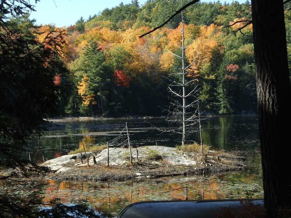 Wing Pond in Autumn