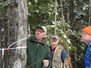 tree tapping