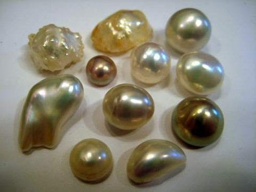 History of Hunting North Country Freshwater Pearls ...