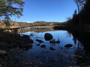 beaver pond in putnam