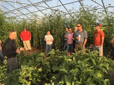 vegitable growers learn the progress of the cherry tomato production