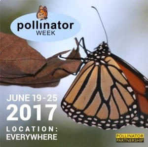 Pollinator Week at the Wild Center