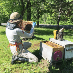 Cornell University Honey Bee Extension Associate Emma Mullen inspects a hive in Northern NY