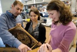 pollinators program