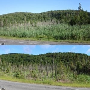 Lake Placid Wetland - Phragmites Management Timelapse