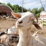 thurman farm tour