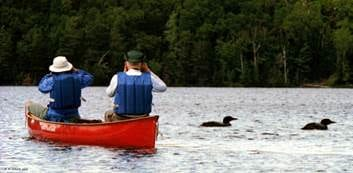 paddlers and loons