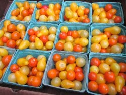 Cherry tomatoes grown on Birdsfoot Farm and prepared for market