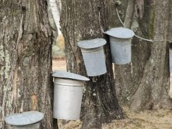 buckets on trees