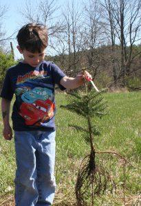 warren co soil and shrub sale