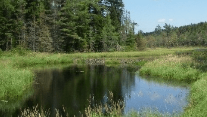 Riparian Restoration and Protection Sites