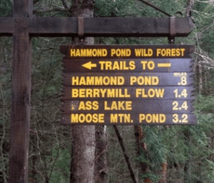 hammond pond wild forest