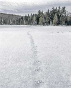 Frozen tracks across Vanderwhacker Pond