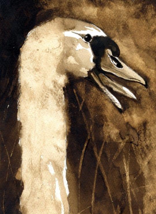 swan by Adelaide Tyrol