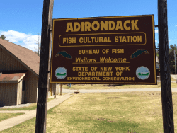 adirondack fish hatchery