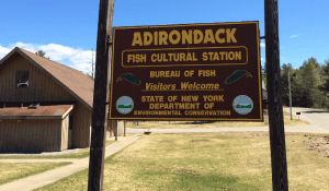 adirondack fish hatchery