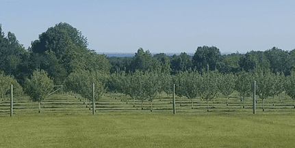 prairies orchard trees