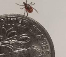 tick next to dime