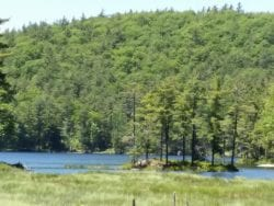 Rock Pond Pharaoh Lake Wilderness photo by John Warren
