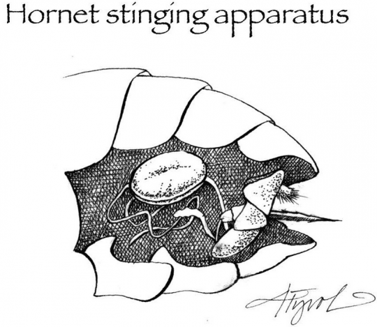 hornet stinging apparatus