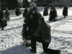 Dave Crosby decorating a tree