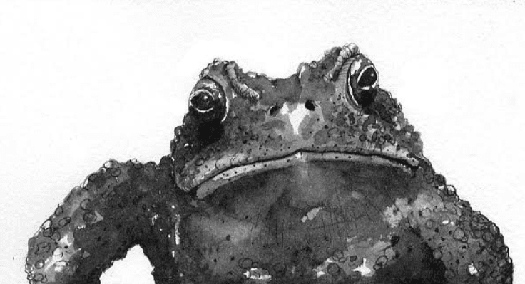 Toad Toxin Don T Mess With Anaxyrus The Adirondack Almanack
