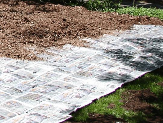 garden sheet mulching
