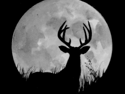 rutty moon adelaide tyrol